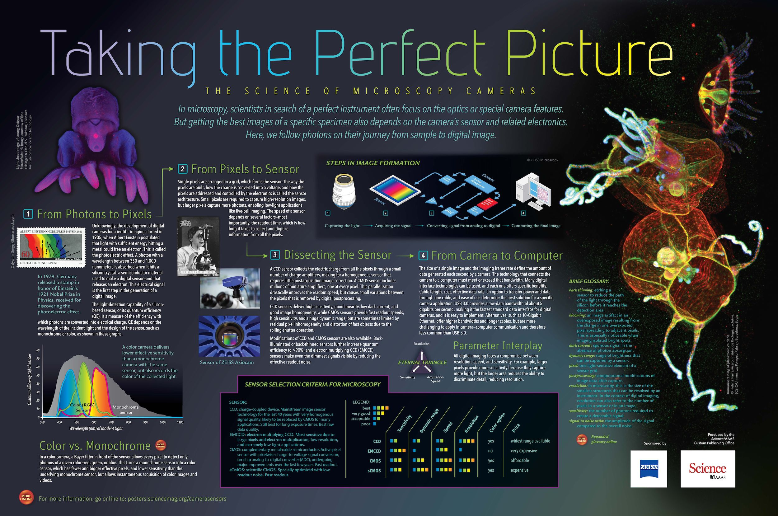 taking the perfect picture the science of microscopy cameras